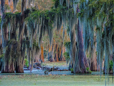 Unveiling The Secrets Of Da Swamp At Cypress Island Preserve Art Print