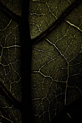 Photograph - Veins  by Erica Kinsella