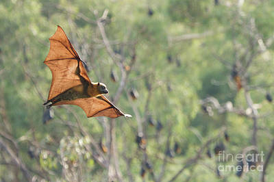 Photograph - Veins In The Wings by Craig Dingle