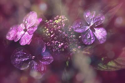 Photograph - Velvet Touch by Nicole Frischlich