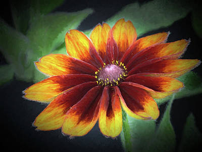Photograph - Velvety Flower - 365-150 by Inge Riis McDonald