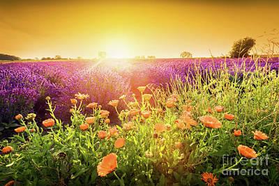 Photograph - vender flower field landscape at sunset. Summer by Michal Bednarek