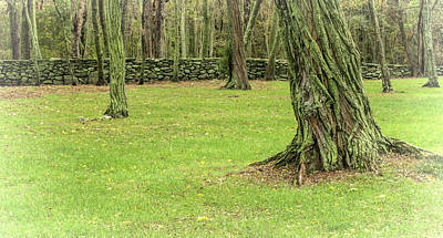 Photograph - Venerable Trees And A Stone Wall by Nancy De Flon