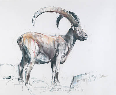 Mountain Goat Drawing - Venerando Stambecco by Mark Adlington