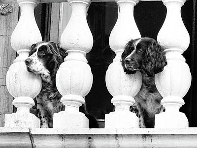 Photograph - Venetian Dogs by Jean Gill