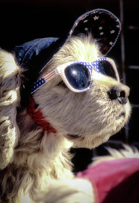 Photograph - Venice Beach Dog by Samuel M Purvis III