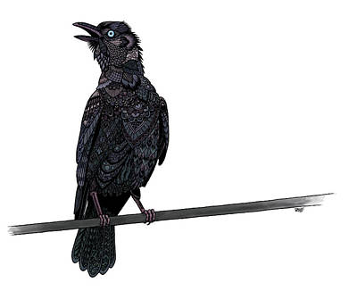 Drawing - Verklempt Crow by ZH Field