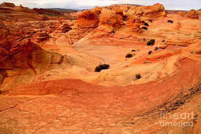 Photograph - Vermilion Cliffs Wilderness Landscape by Adam Jewell