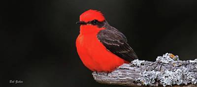 Photograph - Vermilion Flycatcher Mug by Bob Zeller