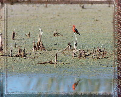 Photograph - Vermillion Flycatcher And Reflection Framed by Debra Martz