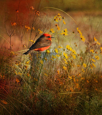 Photograph - Vermilion Flycatcher At St. Marks by Carla Parris