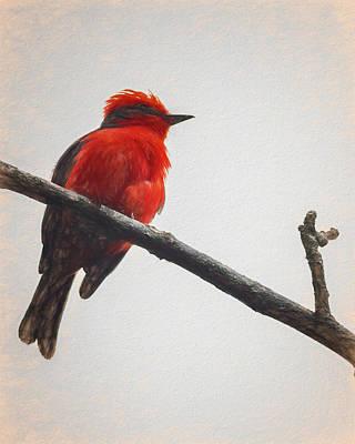 Photograph - Vermillion Flycatcher Quimbaya Colombia by Adam Rainoff