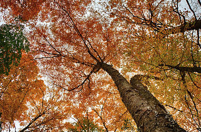Photograph - Vermont Fall Foliage Views by Jeff Folger