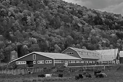 Photograph - Vermont Farm With Cows Autumn Fall Black And White by Toby McGuire
