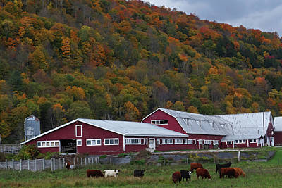 Photograph - Vermont Farm With Cows Autumn Fall by Toby McGuire