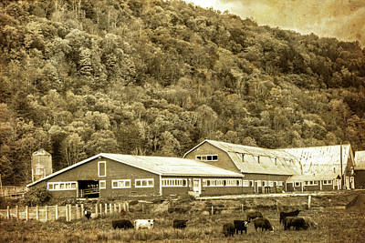 Photograph - Vermont Farm With Cows Autumn Fall Vintage Style by Toby McGuire