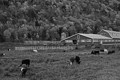 Photograph - Vermont Farm With Cows Black And White by Toby McGuire