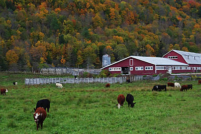 Photograph - Vermont Farm With Cows by Toby McGuire