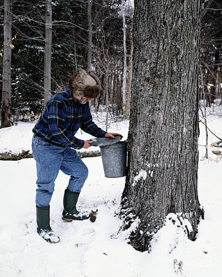 Photograph - Vermont Maple Sugaring - To License For Professional Use Visit Granger.com by Granger