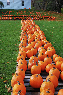 Photograph - Vermont Pumpkins by James Kirkikis