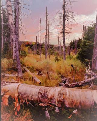 Digital Art - Vermont Woodland Bog Autumn. by Rusty R Smith