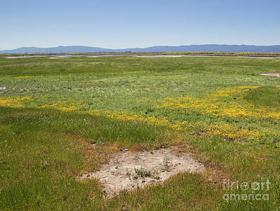 Photograph - Vernal Pools At Warm Springs by Suzanne Luft