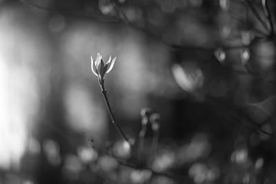 Photograph - Vernal by Scott Rackers
