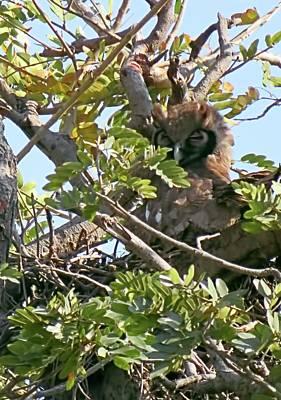 Photograph - Verreaux's Eagle Owl by Jennifer Wheatley Wolf