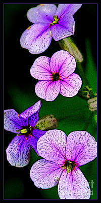 Photograph - Vertical Blooms by Michael Arend