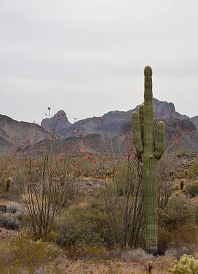 Photograph - Vertical Desert Landscape In The Kofa Wildlife Refuge by rd Erickson
