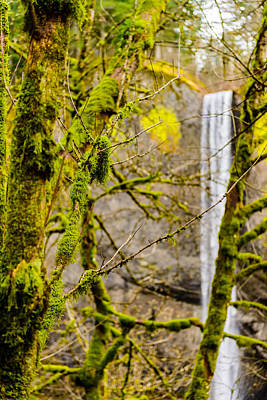 Photograph - Vertical Falls   by Michael Scott