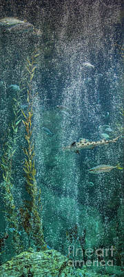 Photograph - Vertical Fish With Bubbles by David Zanzinger