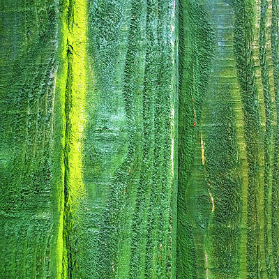 Photograph - Vertical Green by Anne Kotan