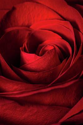 Vertical Rose Art Print