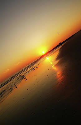 Photograph - Vertical Sunset by Cate Franklyn