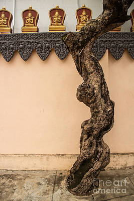 Photograph - Vertical View Of Twisted, Gnarled Tree Trunk Seen Against Asian Pagoda Wall With Black Trim Visible And Gold Figurs Above. by Jason Rosette