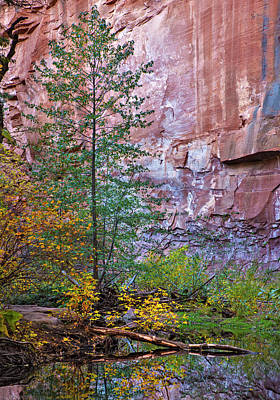 Photograph - Vertical West Fork Fall Colors by Dave Dilli
