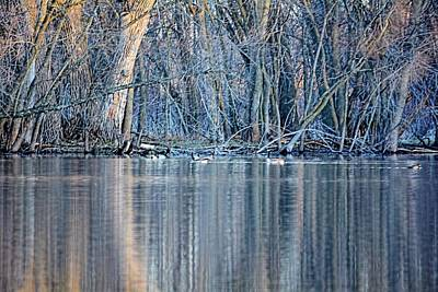 Photograph - Verticals 2 by Bonfire Photography