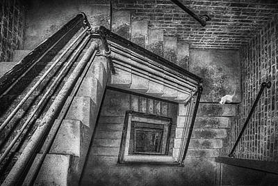 Vertigo - Cat - Stairwell Art Print by Nikolyn McDonald