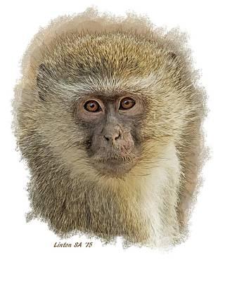 Digital Art - Vervet Monkey 4 by Larry Linton