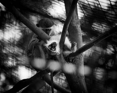 Photograph - Vervet Monkey by Jason Moynihan