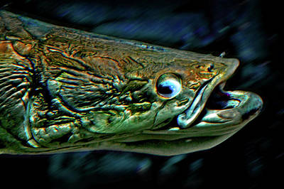 Very Ancient Fish Original