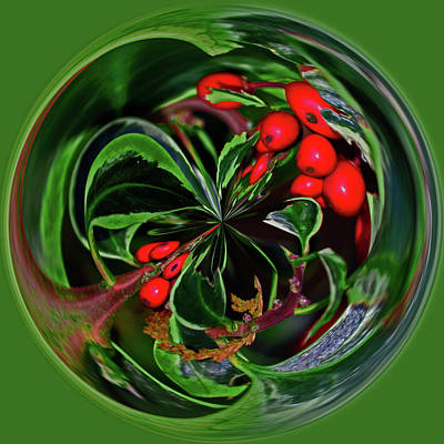 Photograph - Very Berry Jolly Holly Christmas Sphere by Tikvah's Hope