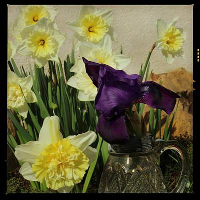 Photograph - Very Early Iris by Chris Berry