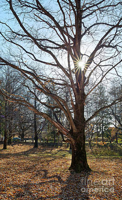 Fall Scenes Photograph - Very Large Oak Trees by Catalin Petolea