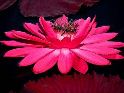 Very Pink Art Print by Rosalie Scanlon