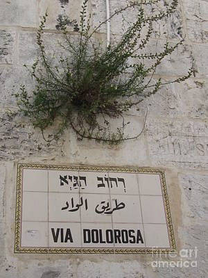Photograph - Via Dolorosa by Donna L Munro