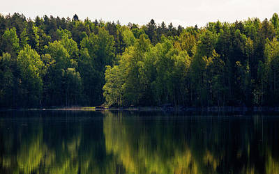Photograph - Vibrance by Ismo Raisanen