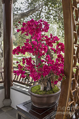 Bonsai Tree Photograph - Vibrant And Blooming Bonsai Tree. by Jamie Pham