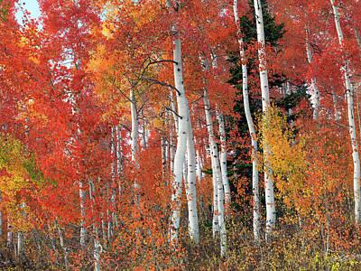 Idaho Photograph - Vibrant Aspen Forest by Leland D Howard